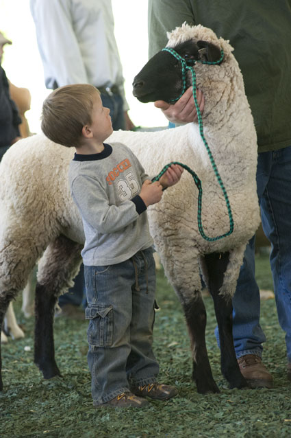 sheep and boy