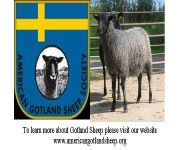 American Gotland Sheep Society