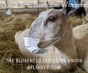 Bluefaced Leicester Union