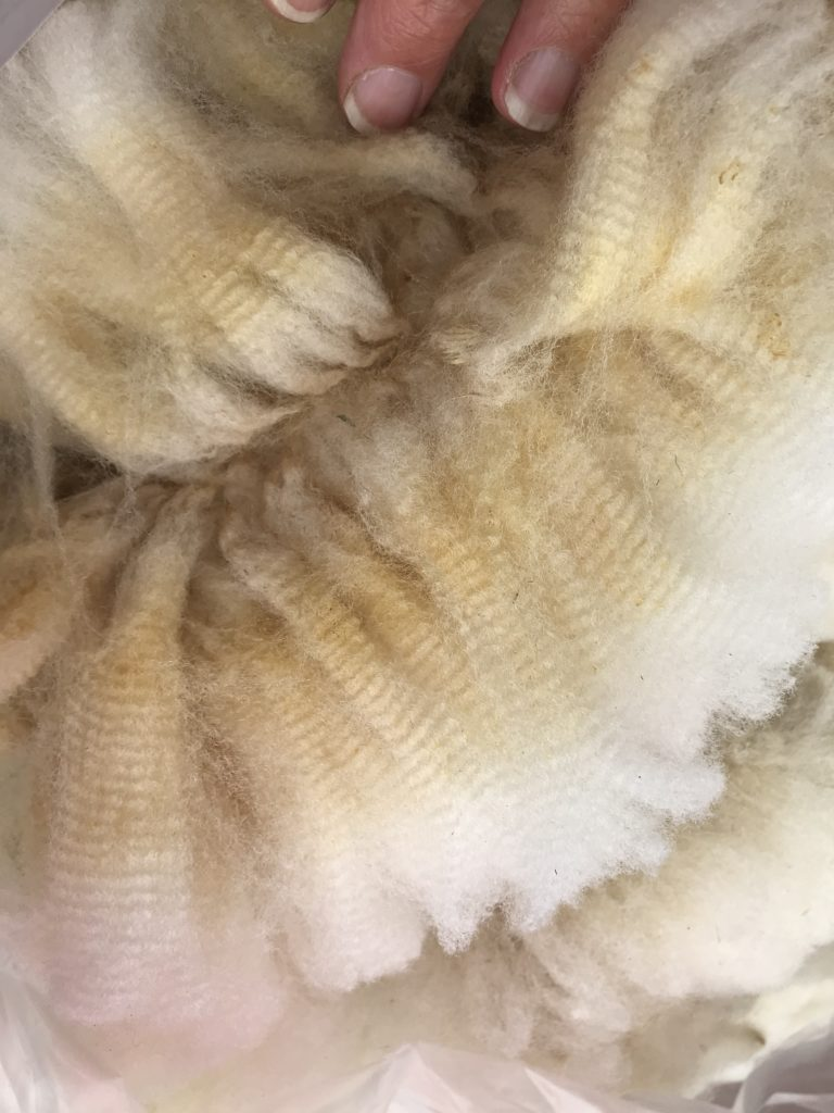 Tunis Wool